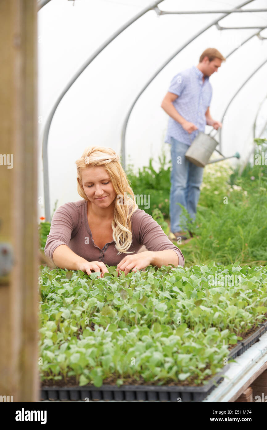 Couple In Greenhouse On Organic Farm Checking Plants - Stock Image