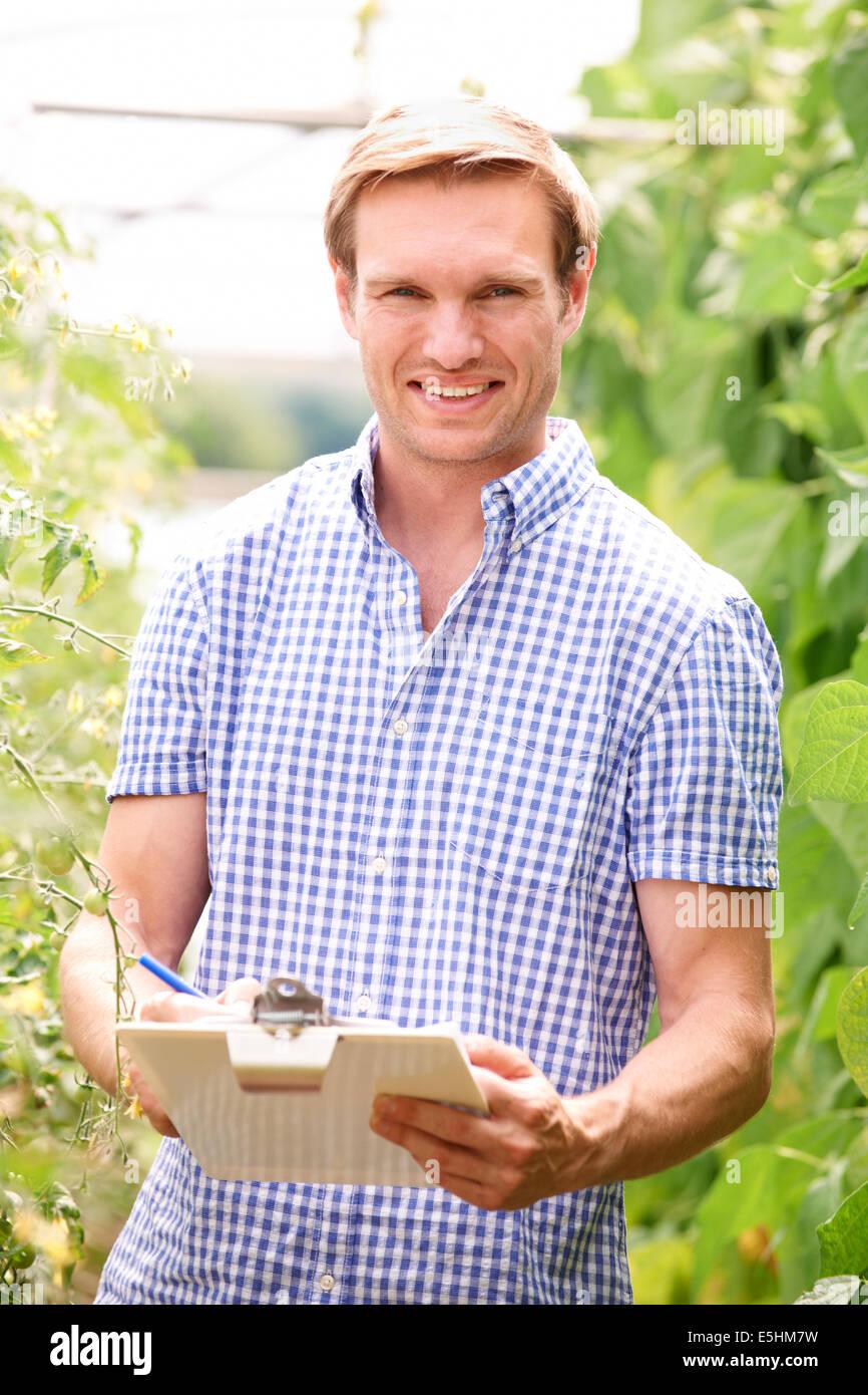 Farmer In Greenhouse Checking Tomato Plants - Stock Image
