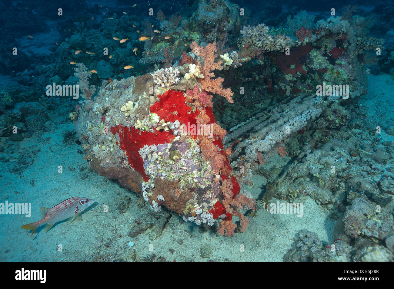 Remains of Précontinent II, Conshelf II in the Red Sea off Sudan coast - Stock Image