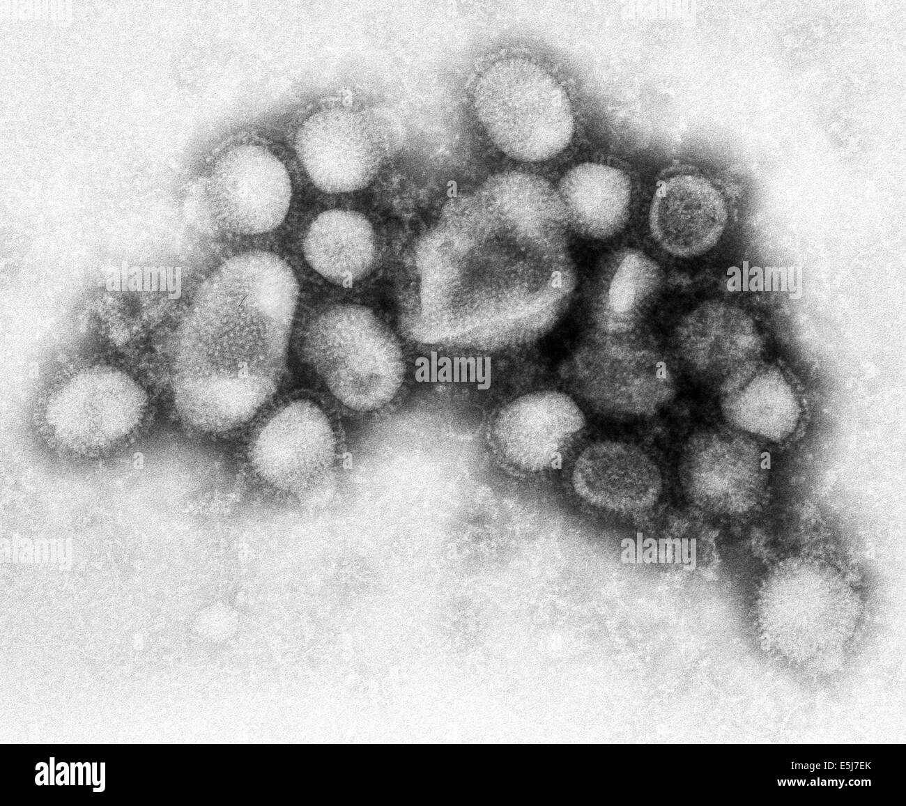 The H1N1 virus that caused a pandemic is now a regular human flu virus and continues to circulate seasonally worldwide. - Stock Image