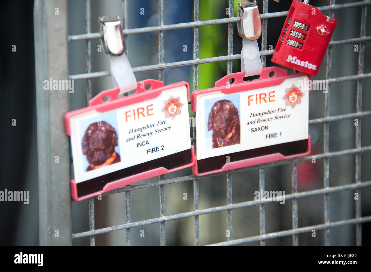 Fire & And Rescue Sniffer Dog USAR ID Card - Stock Image
