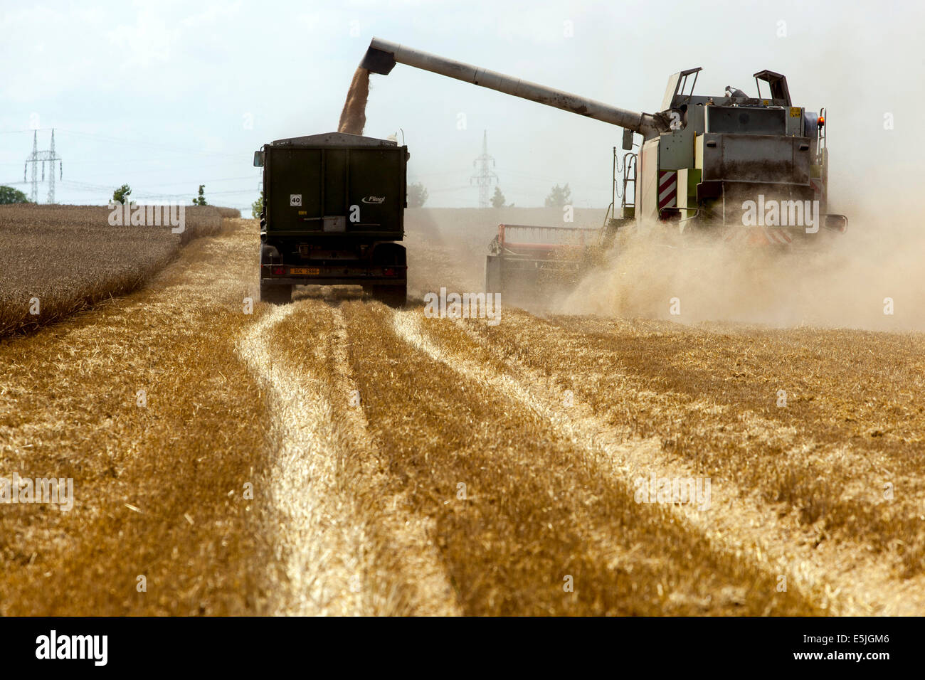 Wheat Harvesting On Field Czech Republic Stock Photo