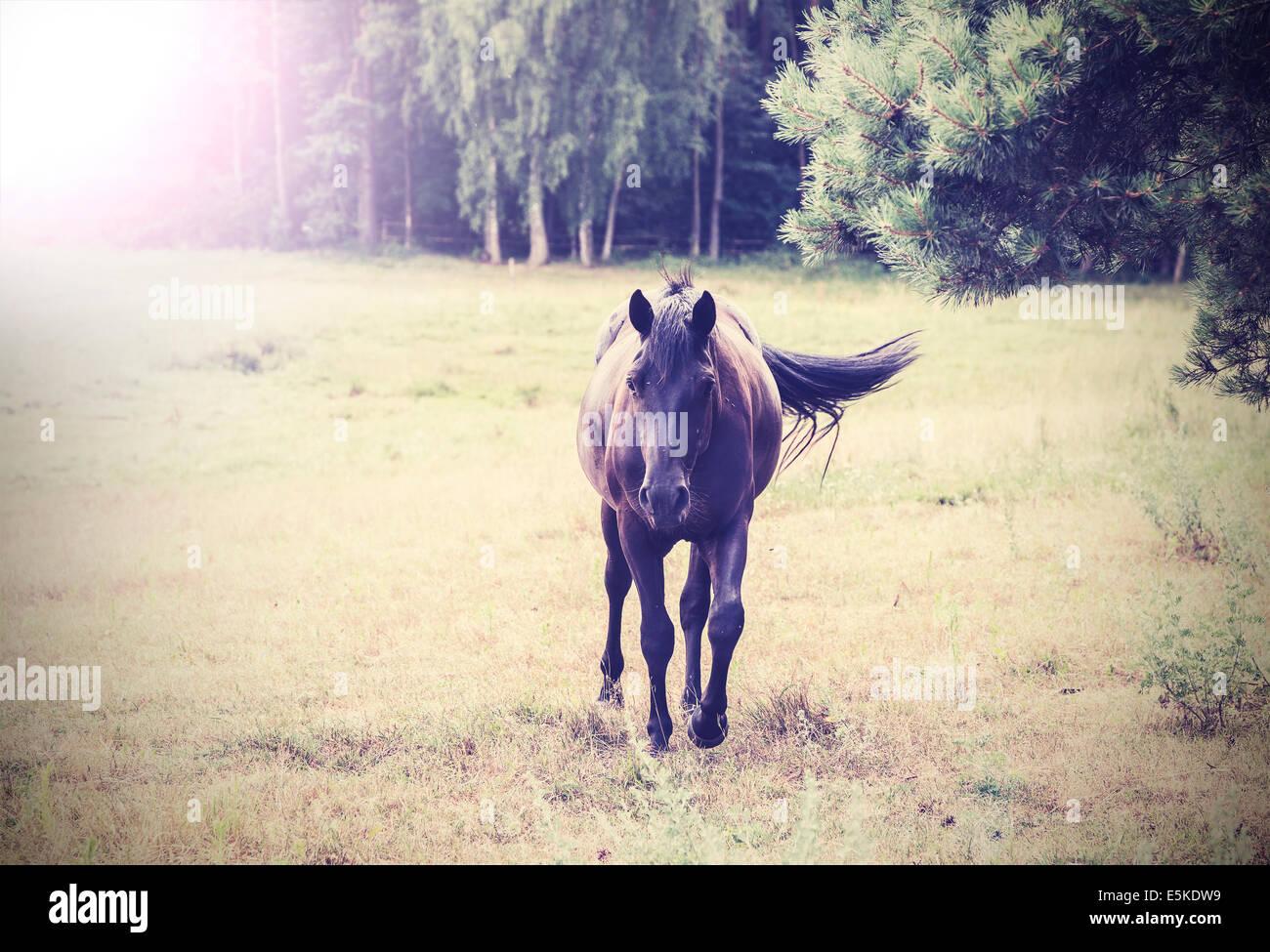horse vintage retro style - Stock Image