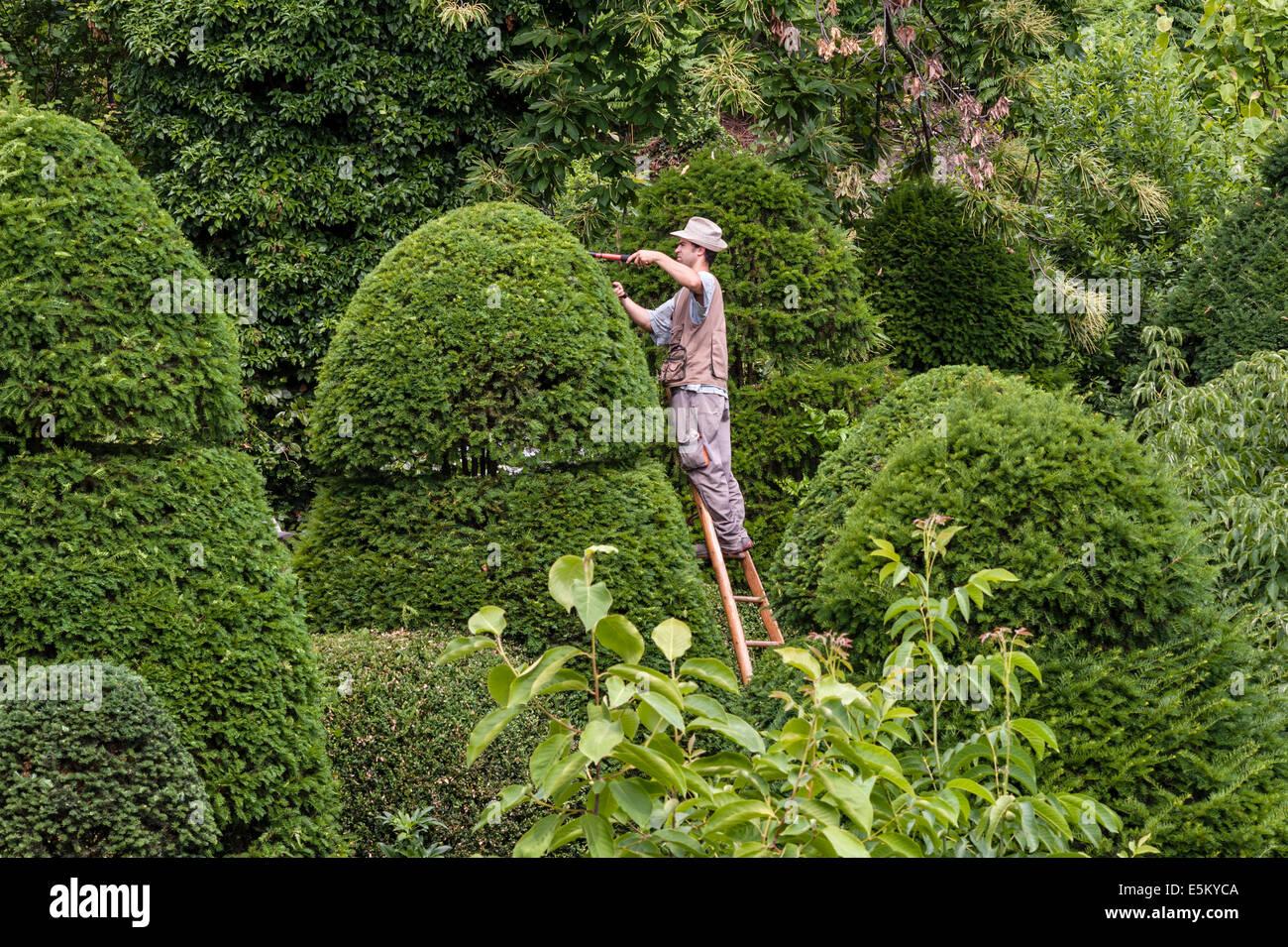 A gardener in an Italian garden clipping shrubs into shape - Stock Image