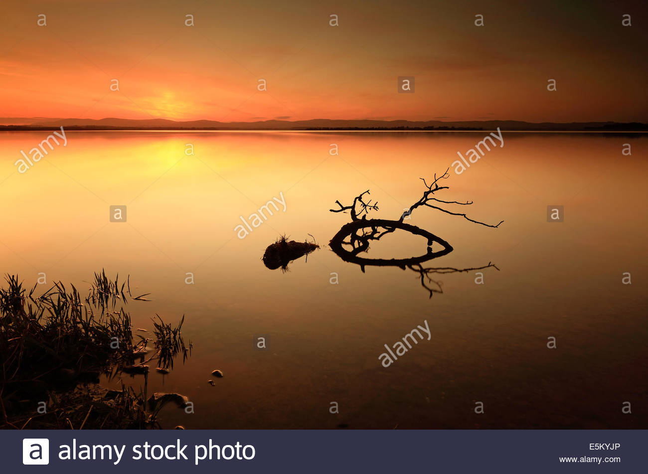 A beautiful Sun setting on the shores of a calm Loch Leven, Perth and Kinross, with a broken tree branch lying in - Stock Image