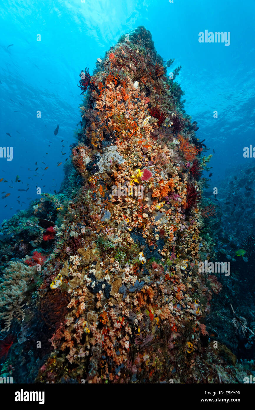 Standing coral reef with a dense vegetation of lower animals, Great Barrier Reef, UNESCO World Natural Heritage - Stock Image