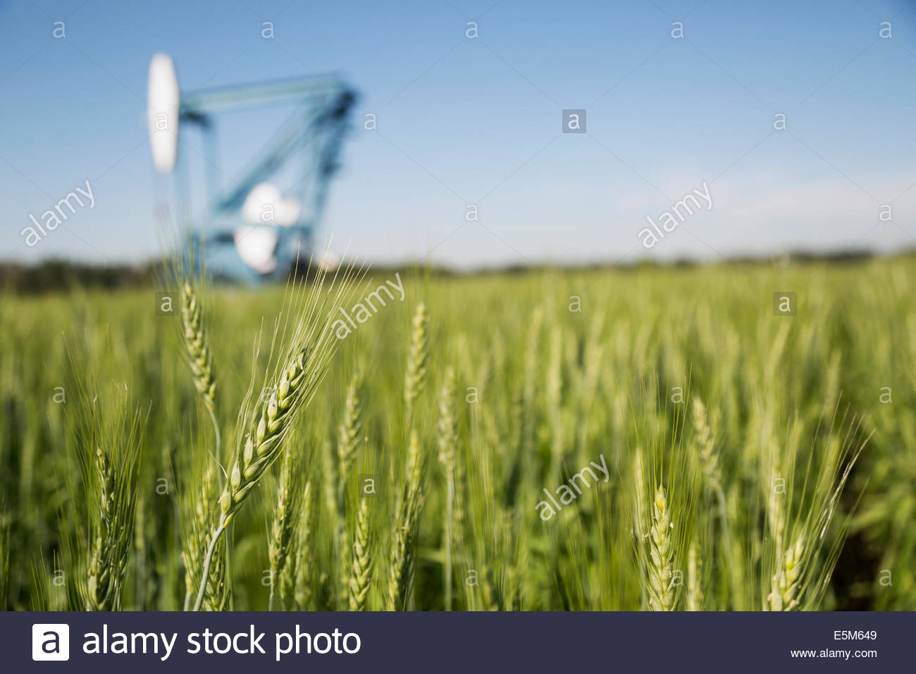 Oil well in background of green wheat field - Stock Image