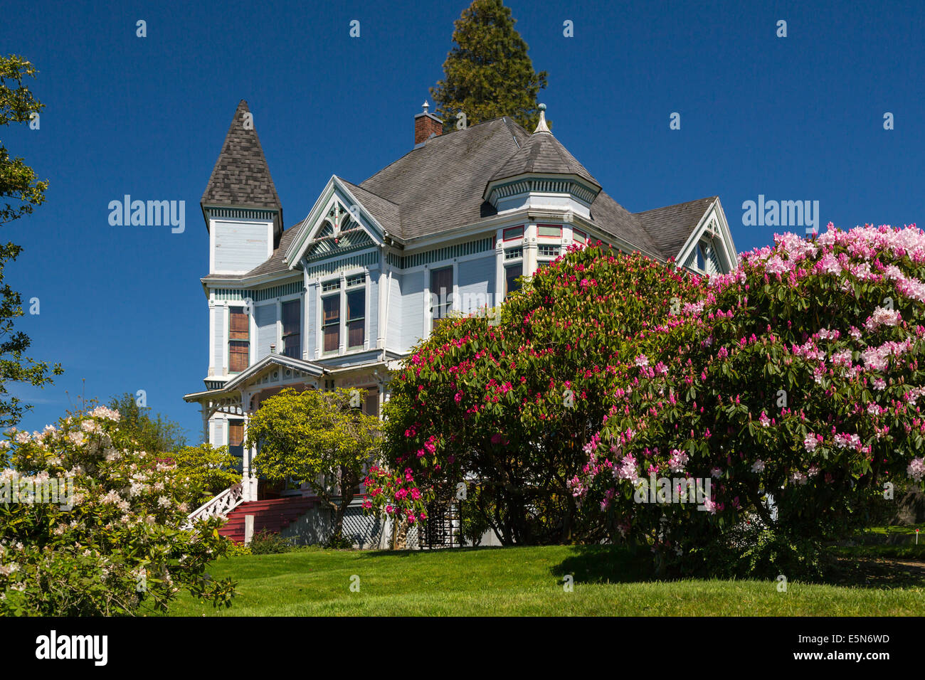 A large historic colonial home with rhododendron bushes in Astoria, Oregon, USA. - Stock Image