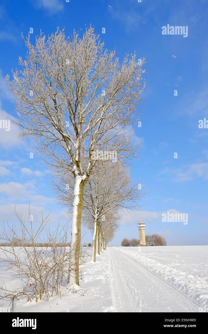 Pedunculate Oaks and Longinus Tower in winter, Nottuln, Baumberge, Munsterland, North Rhine-Westphalia, Germany - Stock Image