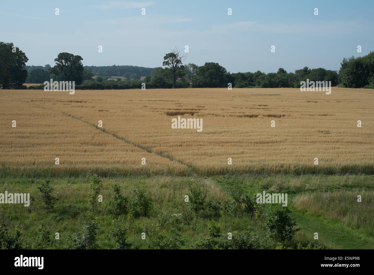 Countrysides, hay meadow - Stock Image