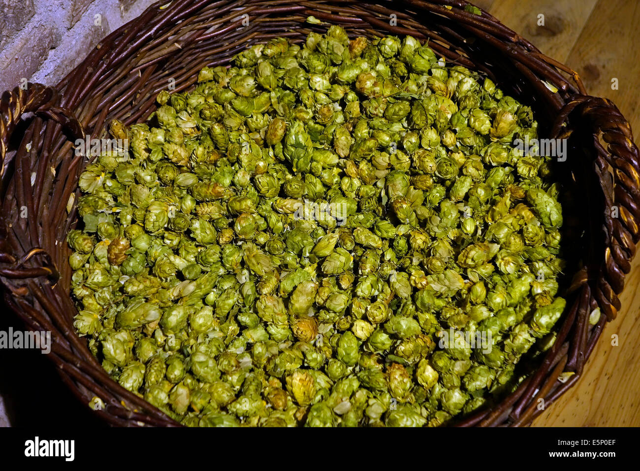 Basket with harvested hops flowers in the Hop Museum about the cultivation and uses of hops at Poperinge, Flanders, - Stock Image