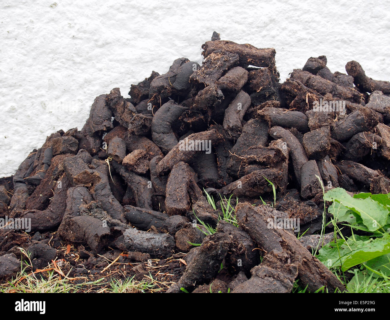 A pile of peat (turf) for fuel piled outside a while painted traditional Irish cottage. - Stock Image