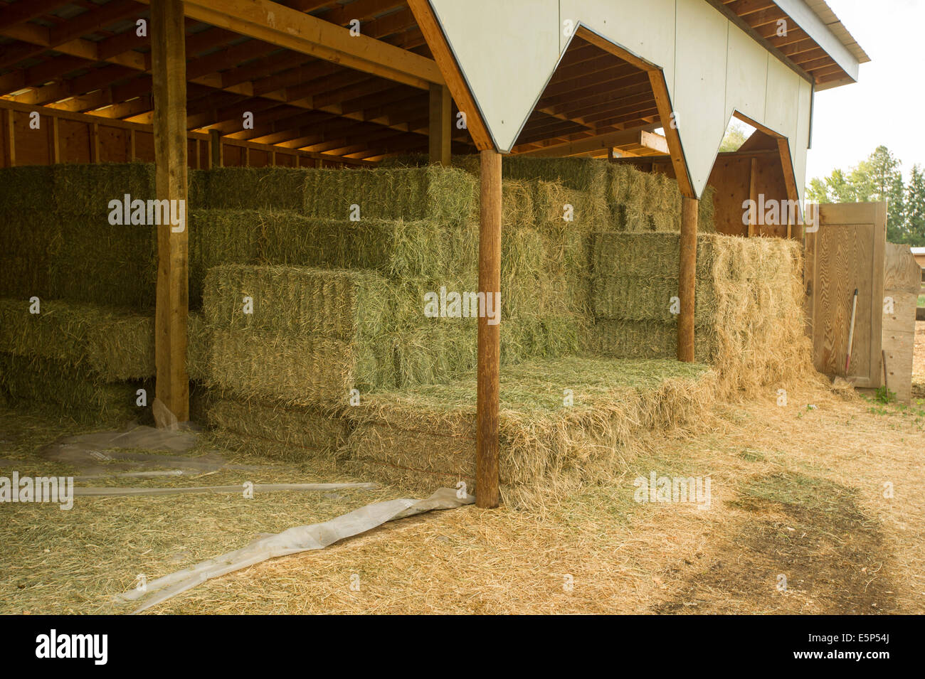 Stacked Bales of hay in a storage shed & Stacked Bales of hay in a storage shed Stock Photo: 72401746 - Alamy
