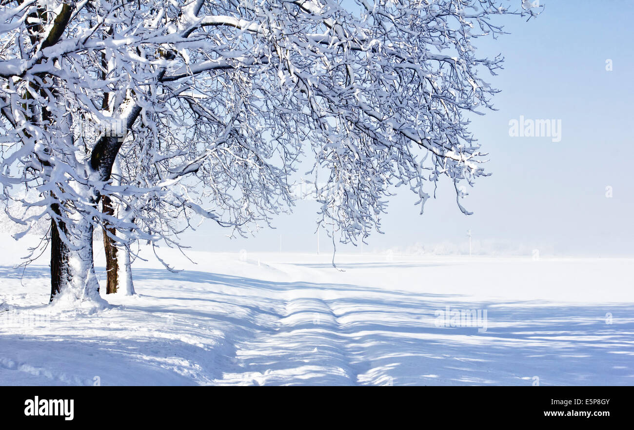 Cold winter morning landscape with fresh snow. Stock Photo