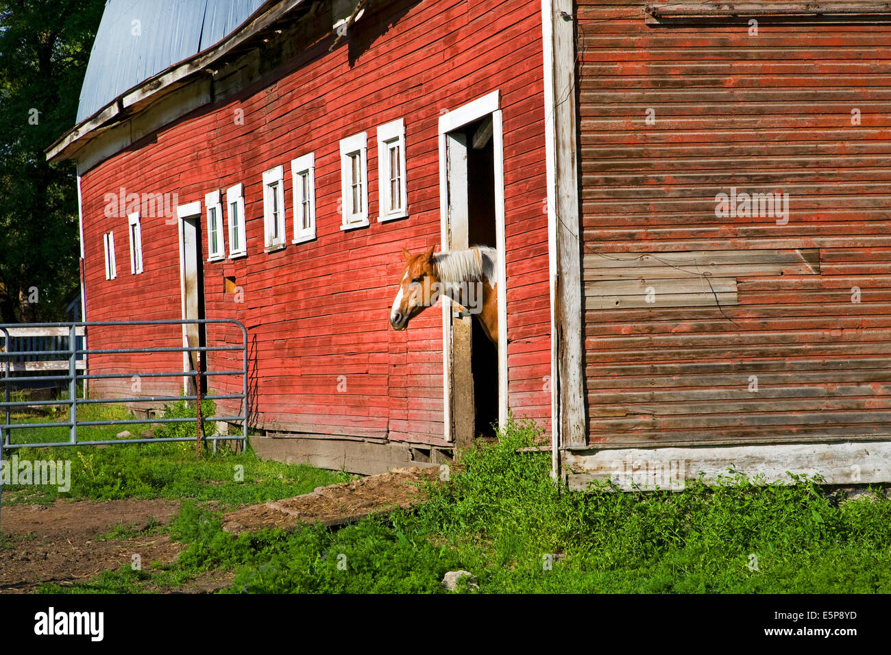 A horse in a barn, on a farm in the remote Palouse Empire region,  a farming and wheat growing region of rolling - Stock Image