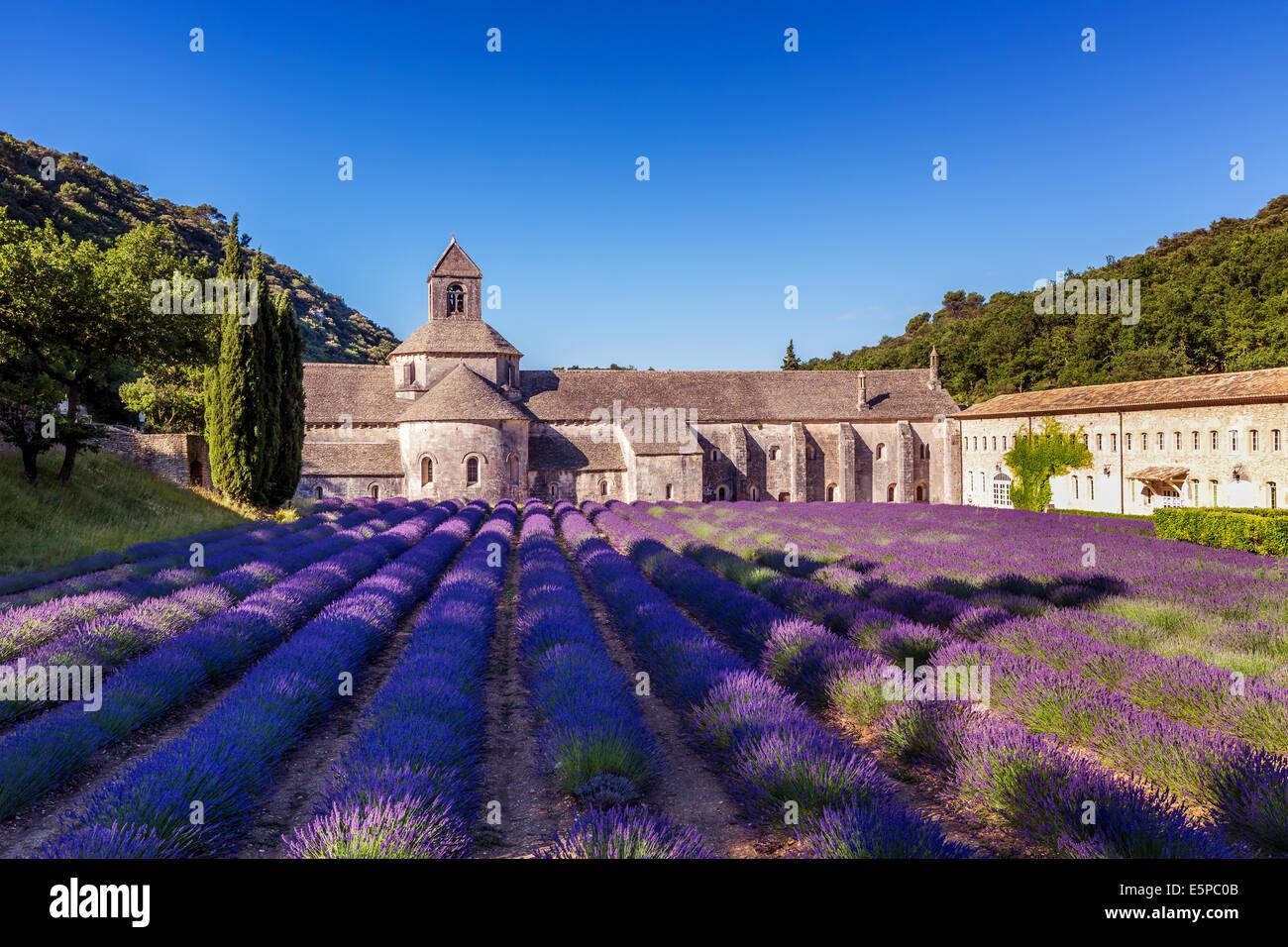 The Romanesque Cistercian Abbey of Notre Dame of Senanque set amongst flowering lavender fields, near Gordes, Provence, - Stock Image