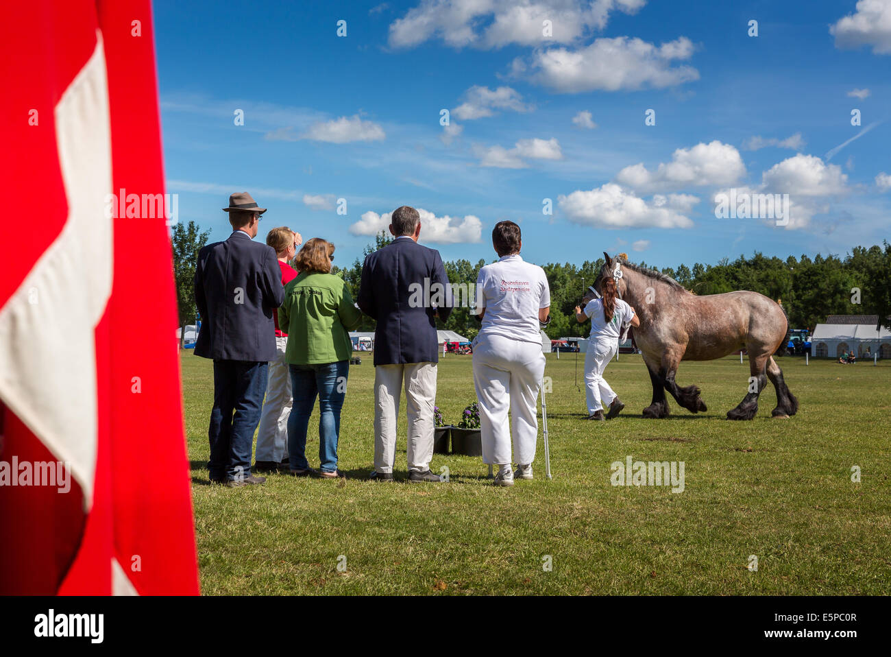 Rear view with the Danish flag in the foreground of judges judging at Funen Agricultural show,  Odense, Denmark - Stock Image