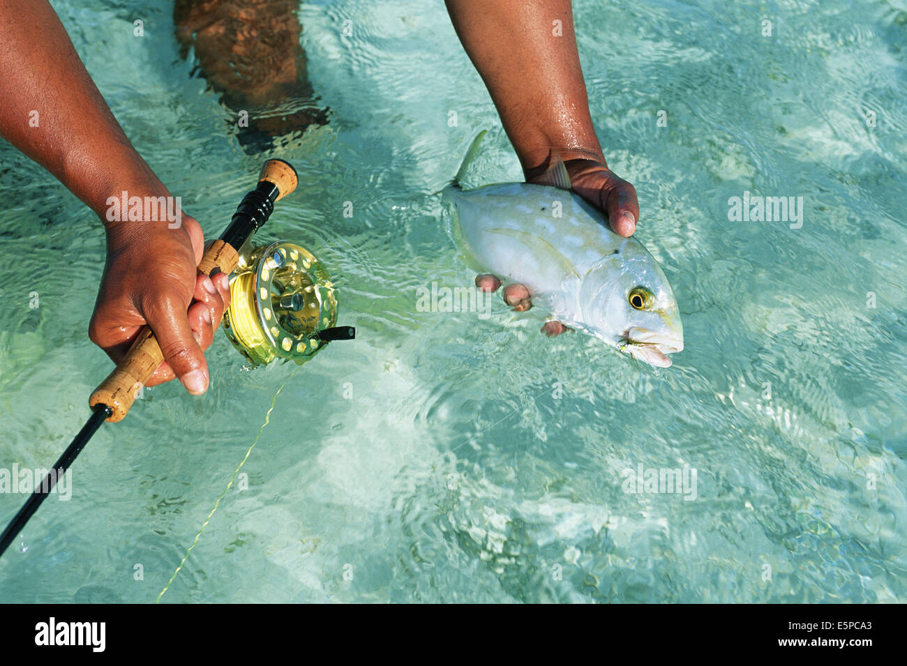 Fisherman with fish caught while fly fishing in Belize - Stock Image
