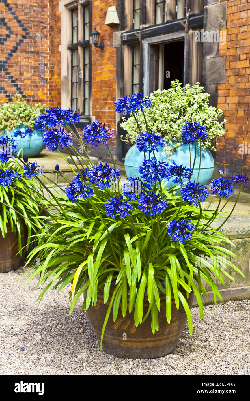 Courtyard with blue agapanthus in a terracotta planter. - Stock Image
