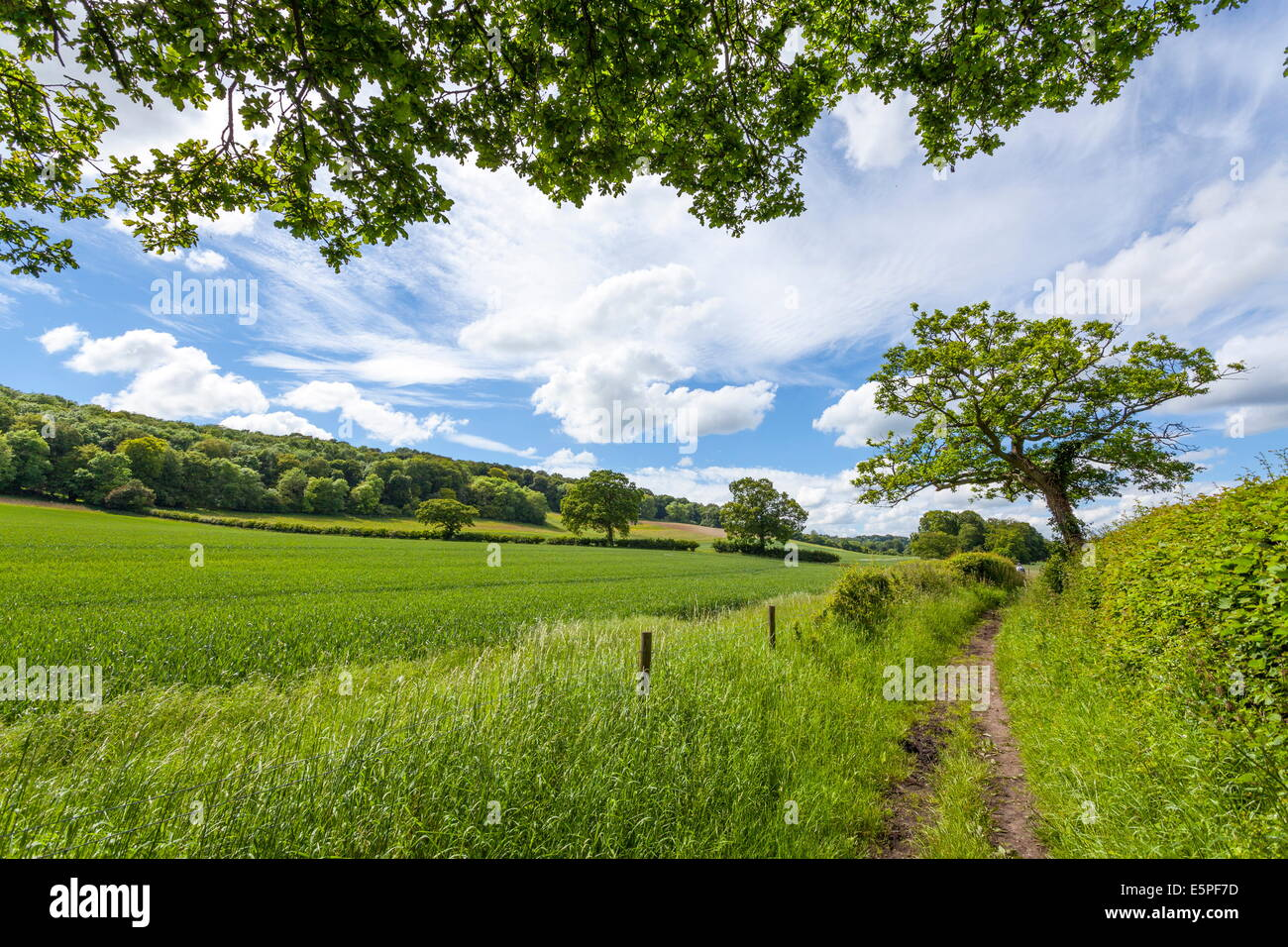 A beautiful day along the Chiltern Walk, The Chilterns, Buckinghamshire, England, United Kingdom, Europe - Stock Image