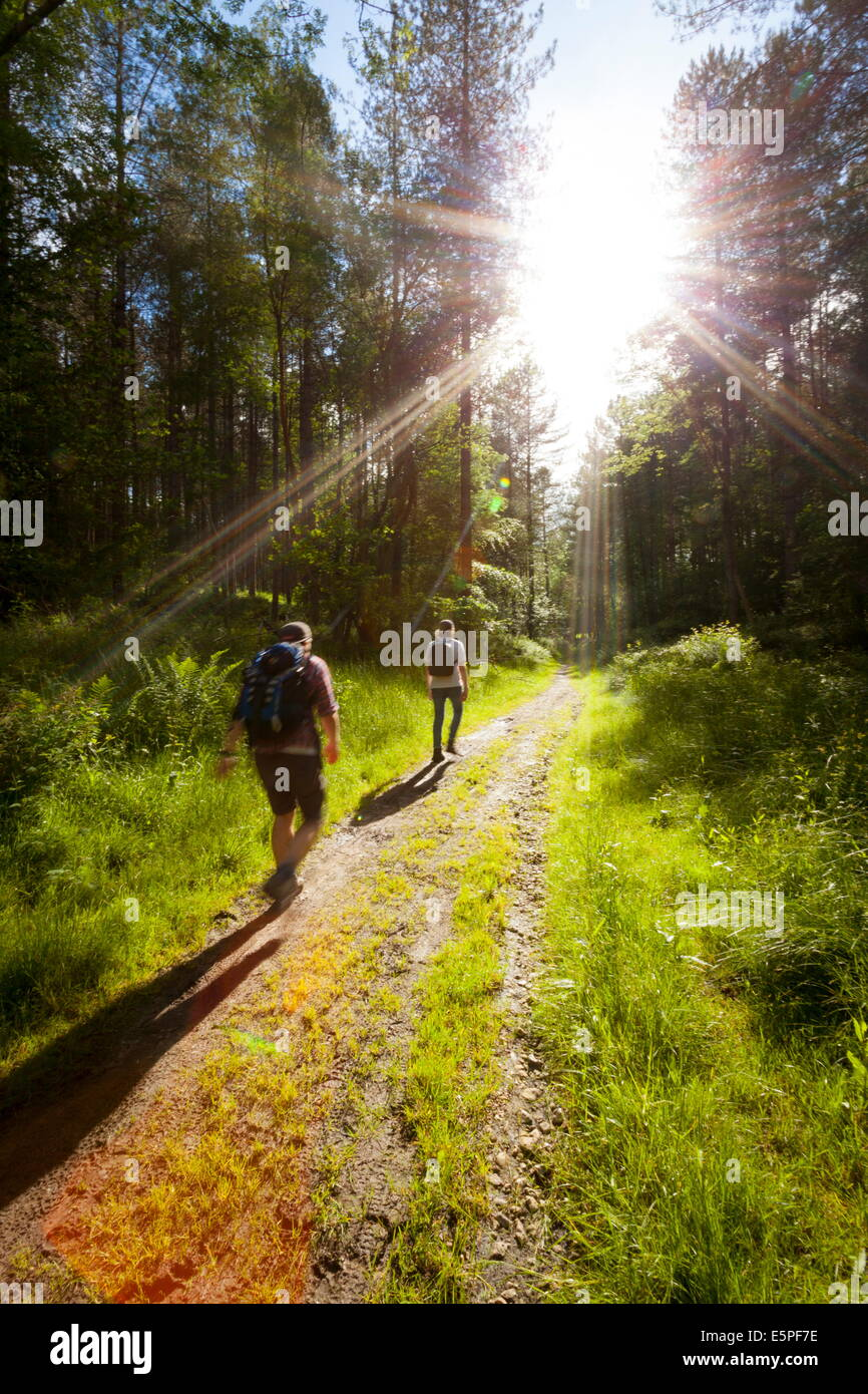Young men hiking on an outdoor adventure trail, The Chilterns, Buckinghamshire, England, United Kingdom, Europe - Stock Image
