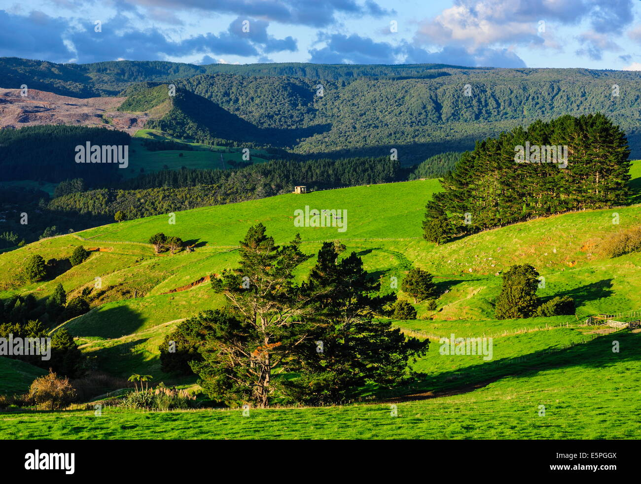 Beautiful scenery in the hinterland of Northland, North Island, New Zealand, Pacific - Stock Image