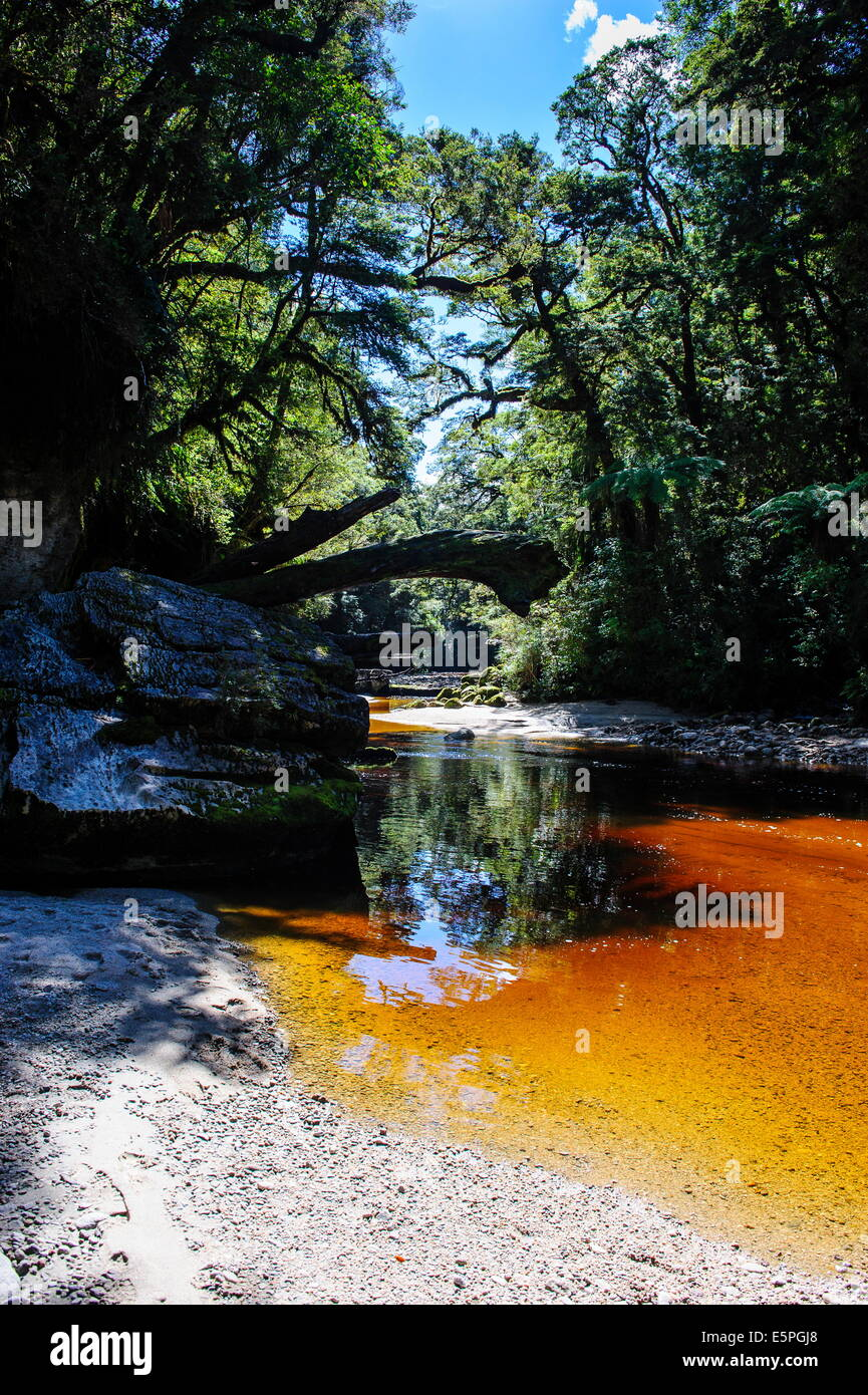 River with very brown water from tree leaves, running through the Oparara Basin, Karamea, West Coast, South Island, - Stock Image