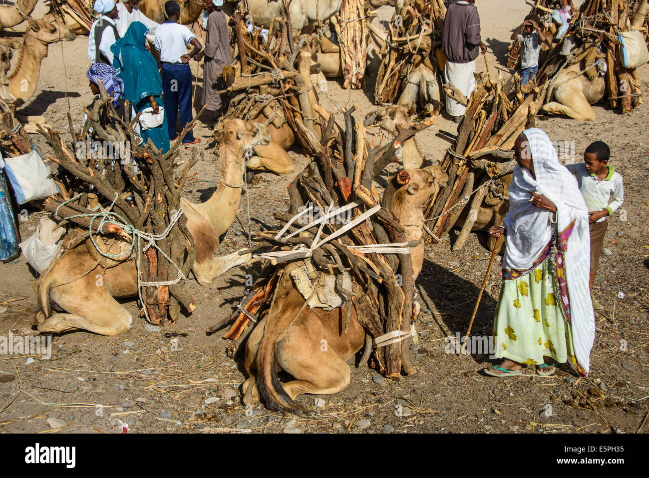 Camels loaded with firewood at the Monday market of Keren, Eritrea, Africa - Stock Image