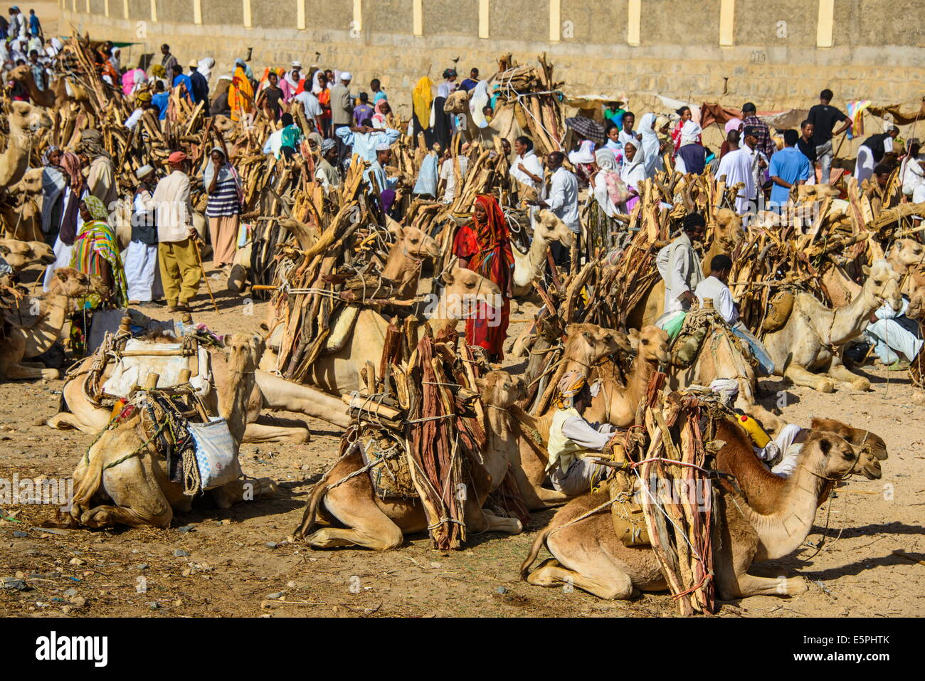 Camels loaded with firewood at the Monday market of Keren, Eritrea, Africa Stock Photo
