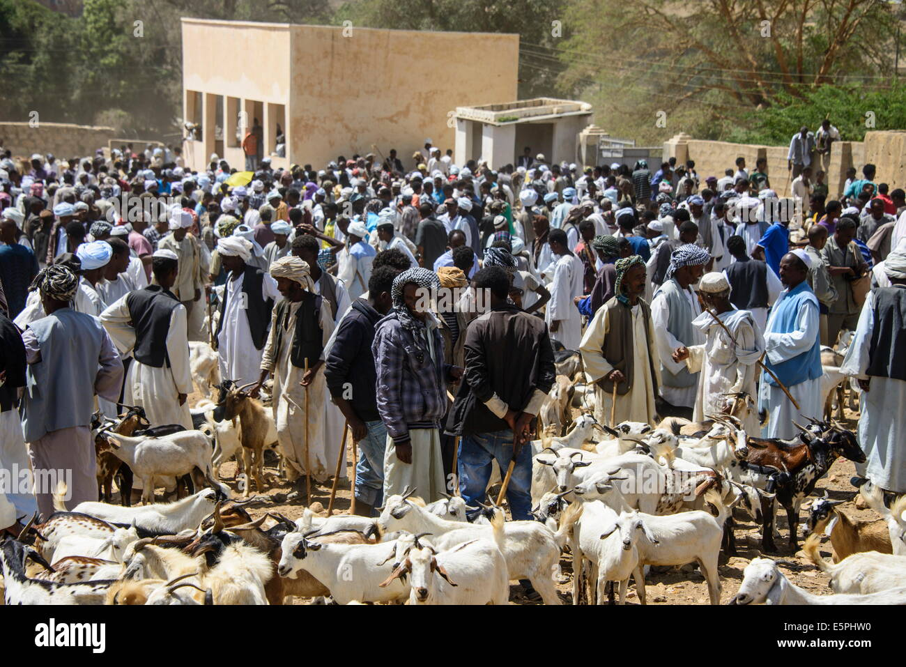 The Monday animal market of Keren, Eritrea, Africa - Stock Image