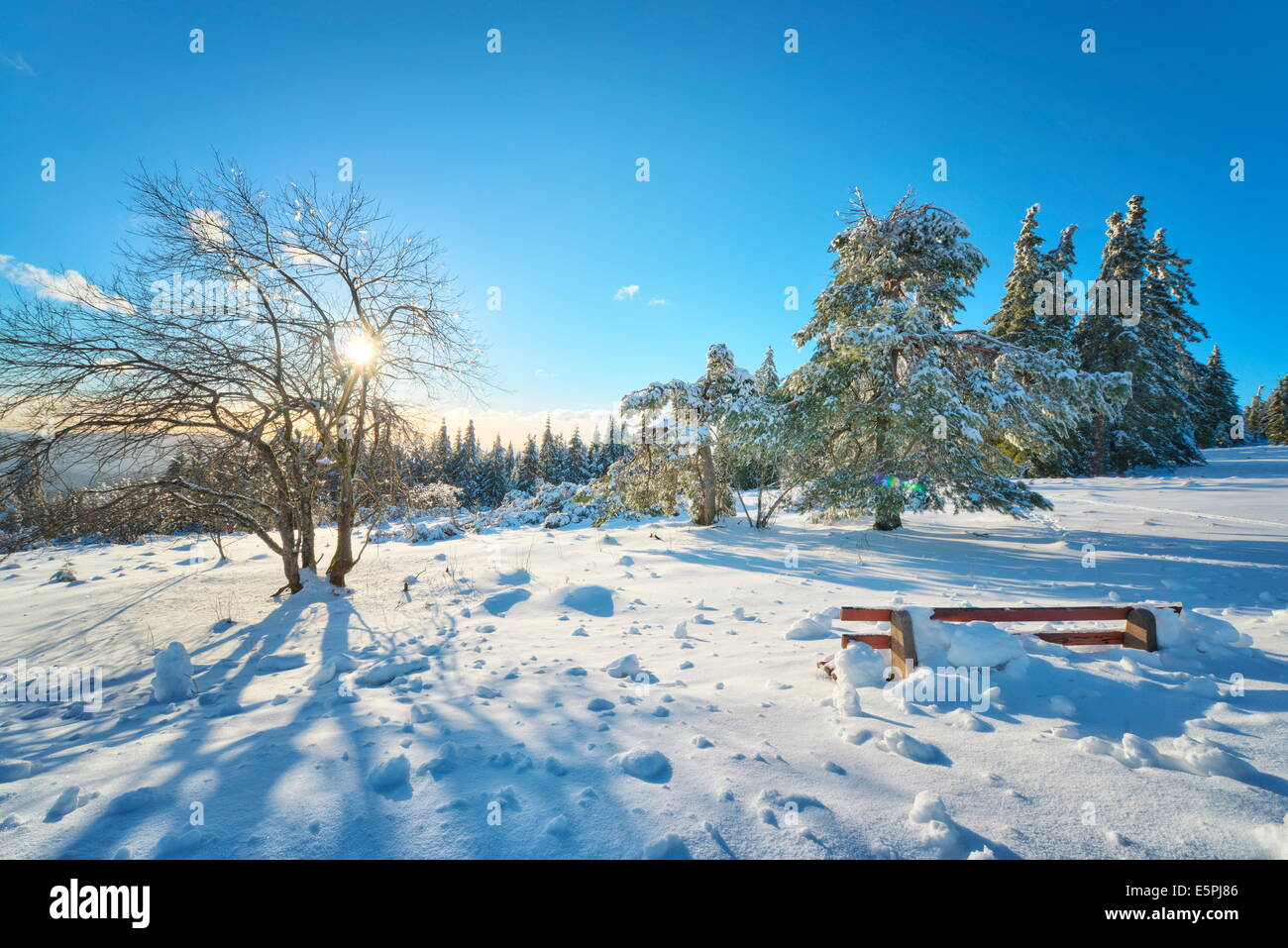 Bench and trees covered in deep snow on mountain Schliffkopf in Northern Black Forest, Baden-Wurttemberg, Germany, Stock Photo