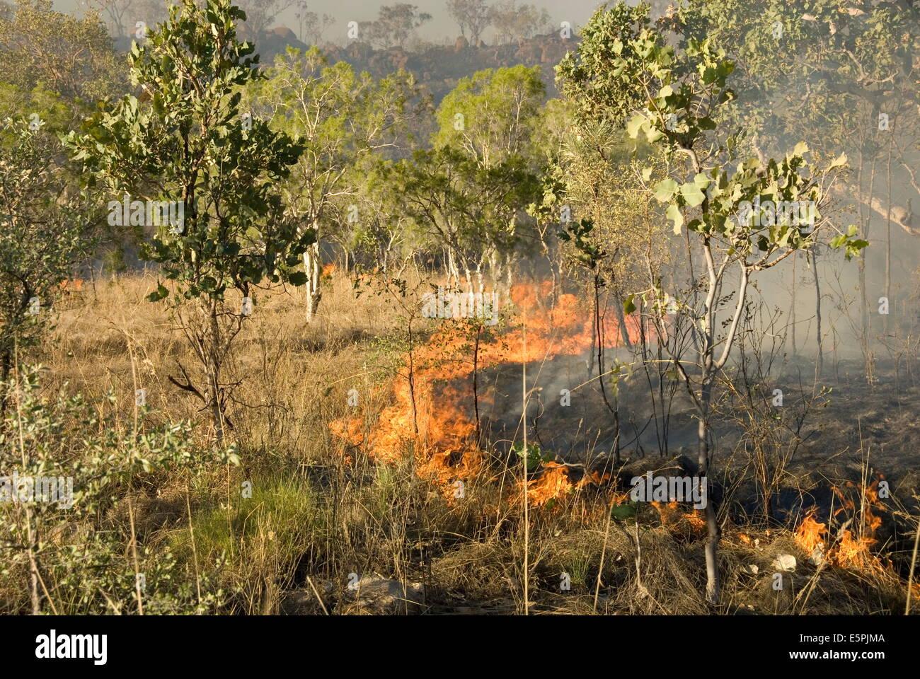 Advancing bush fire beside eastern section of Gibb River Road across The Kimberley, Western Australia, Australia, - Stock Image