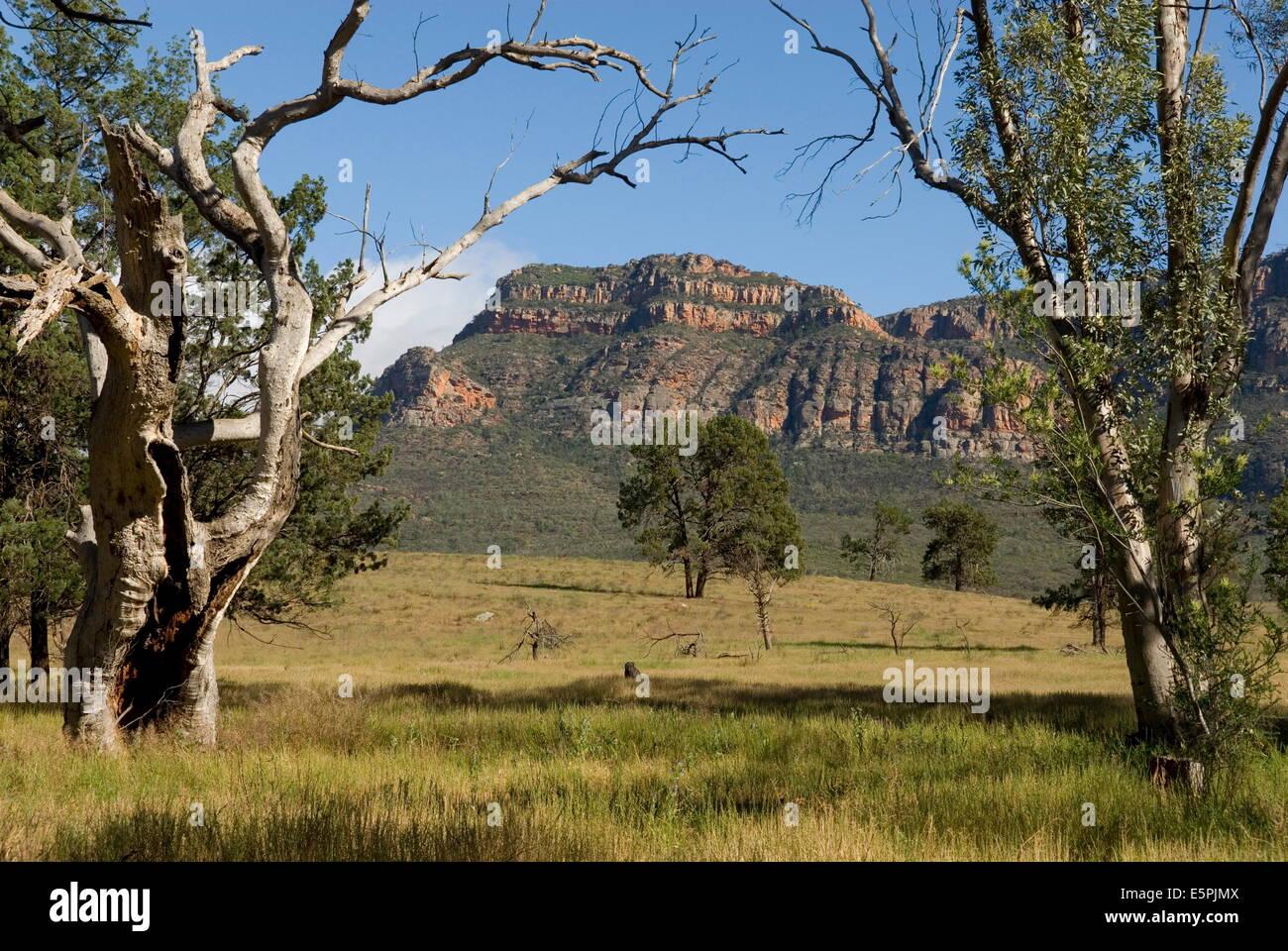 Sandstone escarpment above Wilpuna Valley, Flinders Ranges National Park, South Australia, Australia, Pacific - Stock Image