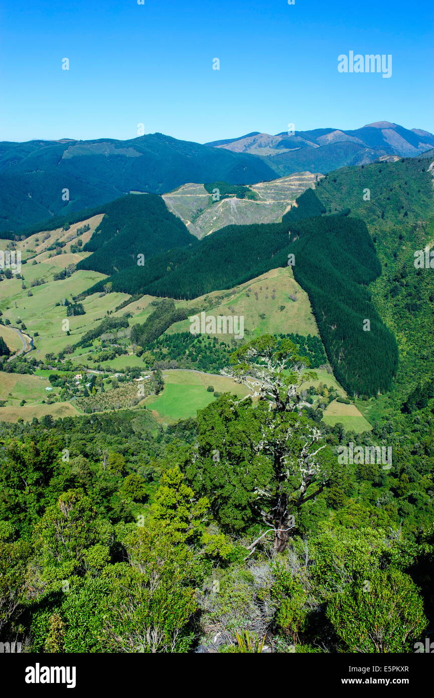View over the lush valley of the Kahurangi National Park, South Island, New Zealand, Pacific - Stock Image