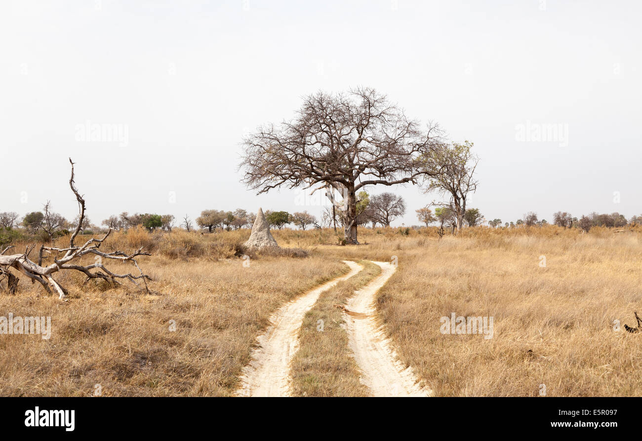 Typical dry season terrain in the Okavango Delta, Botswana, with tracks for the safari vehicles - Stock Image