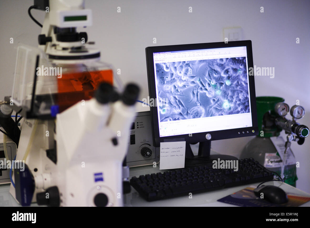 structure and activity of normal and pathological biomolecules  Research laboratory, specialized in the study of - Stock Image