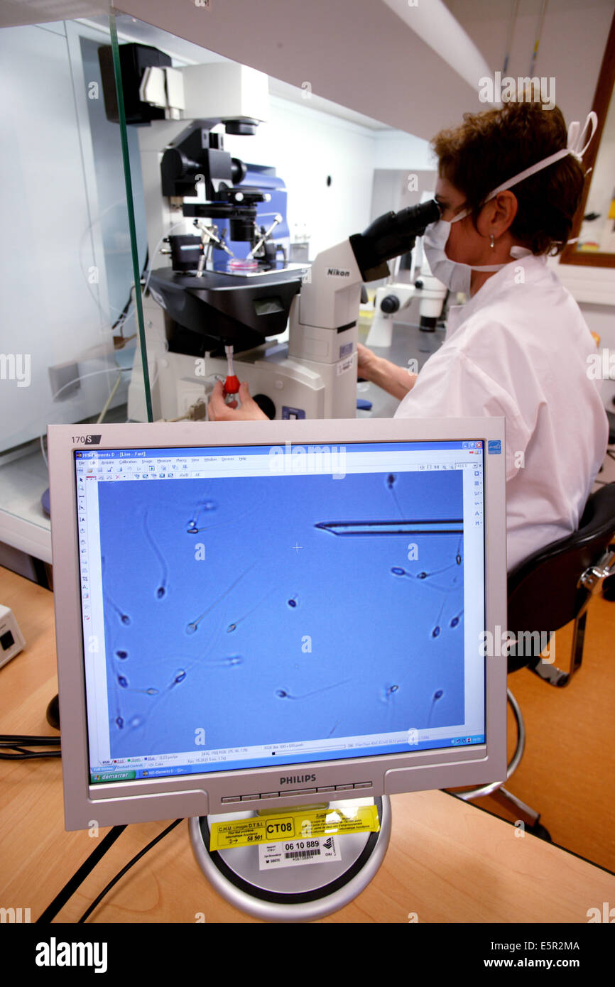 Technician using a light microscope to inject human sperm into a human egg cell (ovum) during in vitro fertilisation Stock Photo