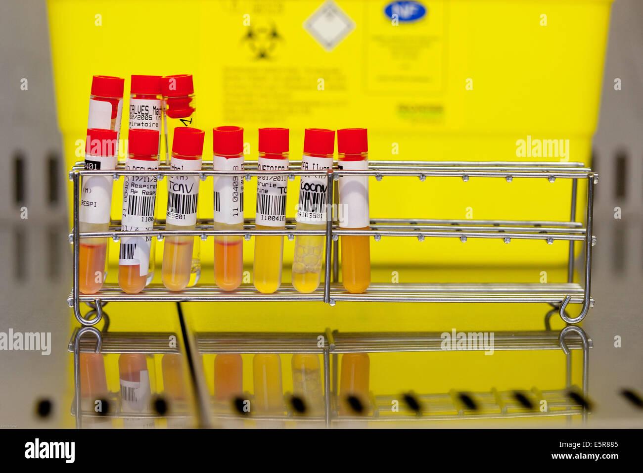 Virology laboratory. - Stock Image