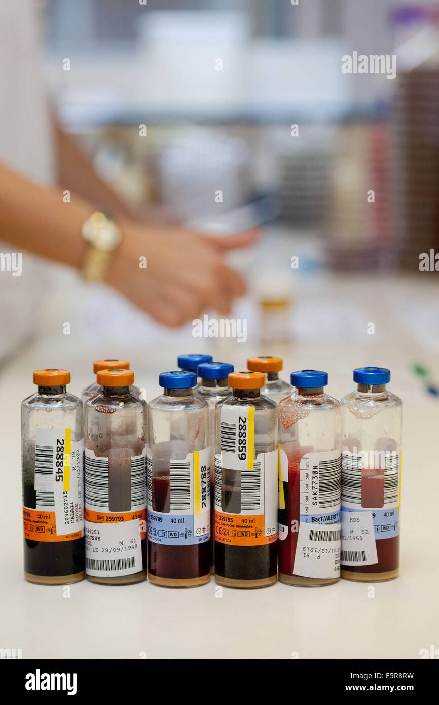 Blood culture bottles, Bacteriology laboratory. - Stock Image