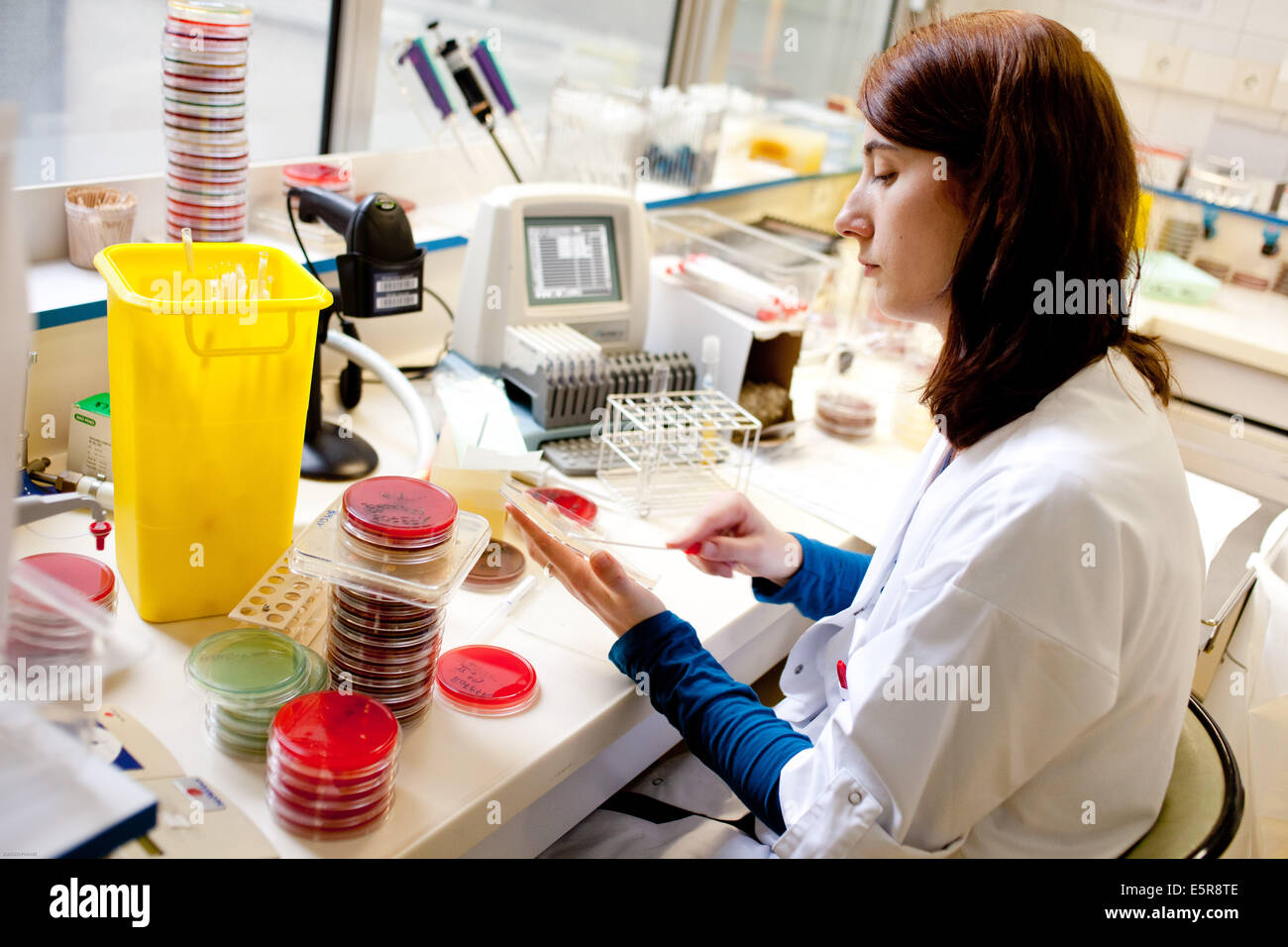 Bacteriology laboratory, Limoges hospital, France. - Stock Image