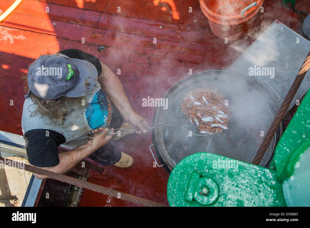 Fisherman boiling shrimps on board of shrimp boat fishing for shrimps on the North Sea - Stock Image