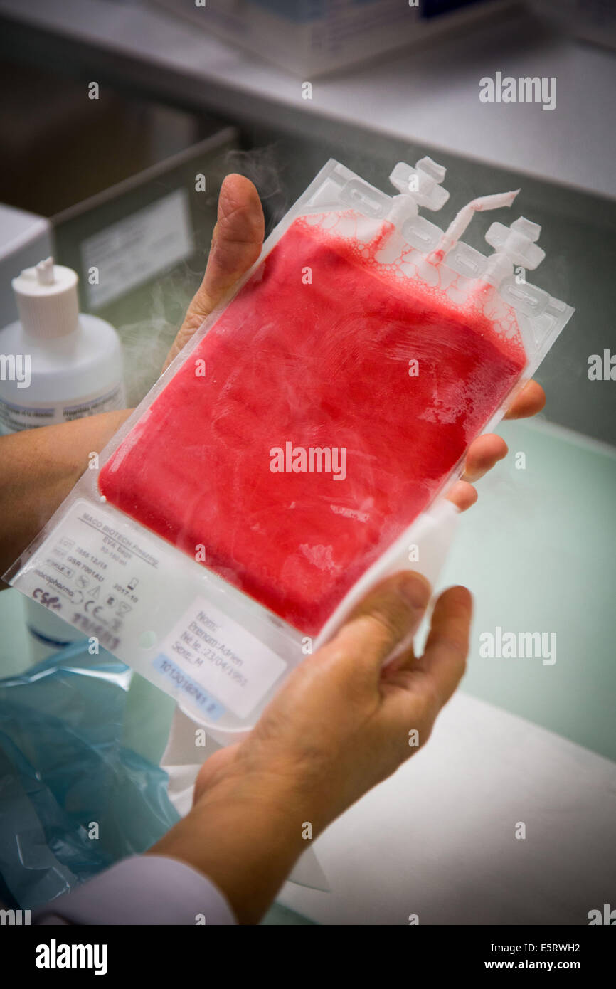 Hematopoietic stem cells frozen bag prior to preparation, Cell Therapy Unit, CTSA in Clamart, France. - Stock Image