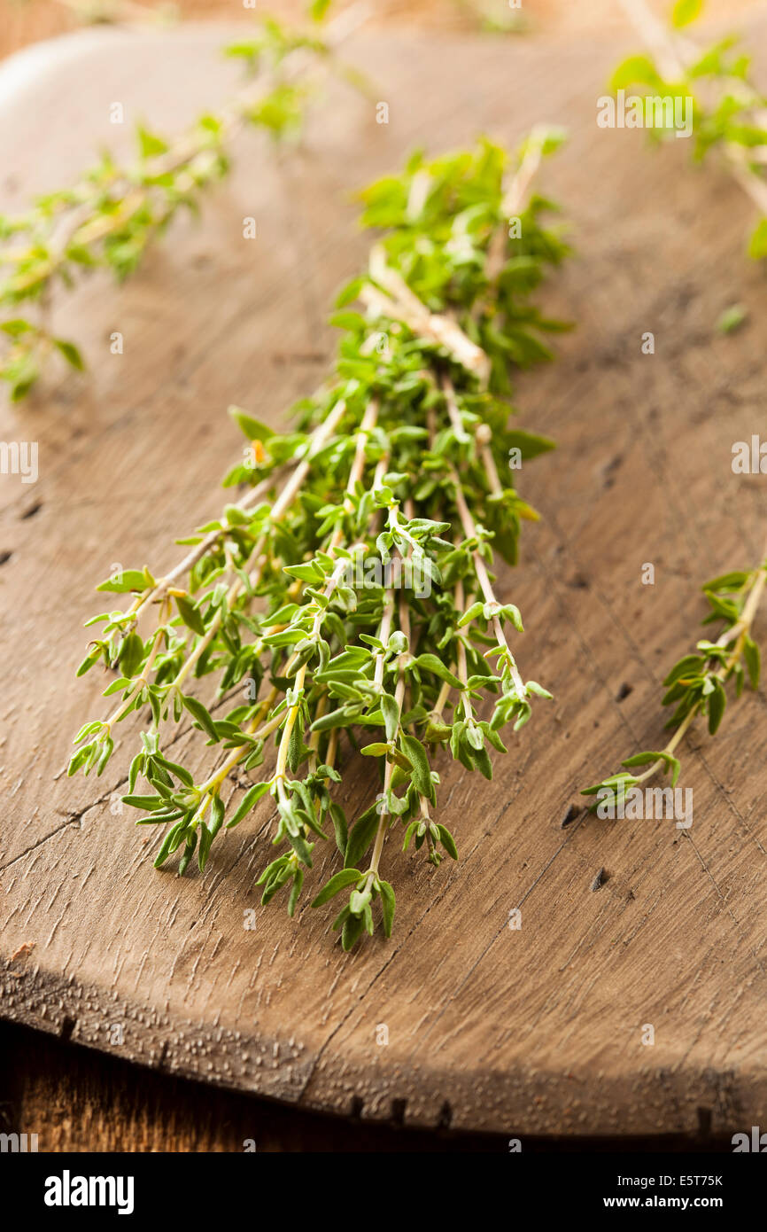Raw Organic Green Thyme in a Bunch - Stock Image
