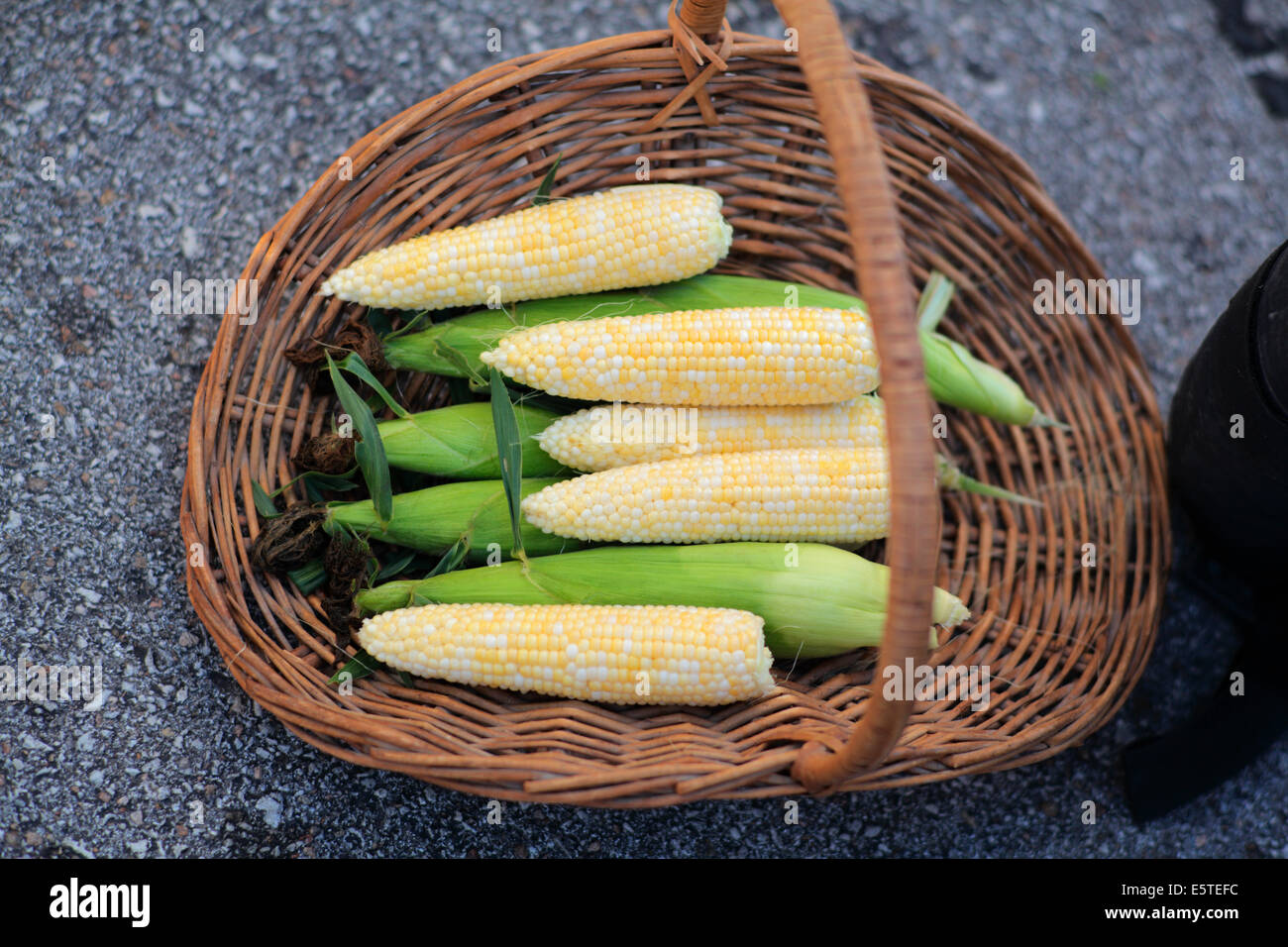Ears of corn in wicker basket. - Stock Image
