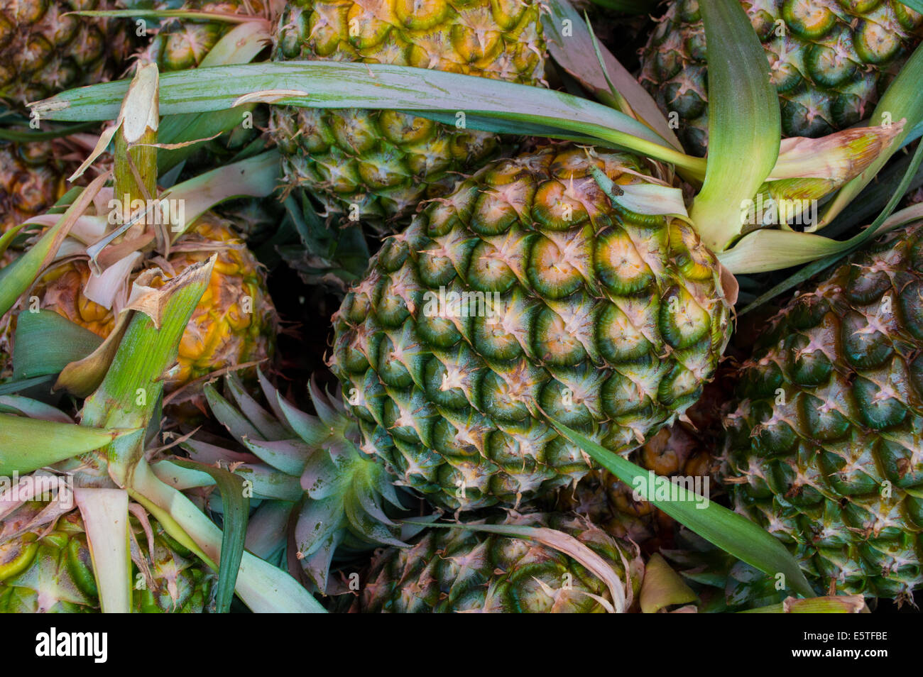 Pineapples - Stock Image