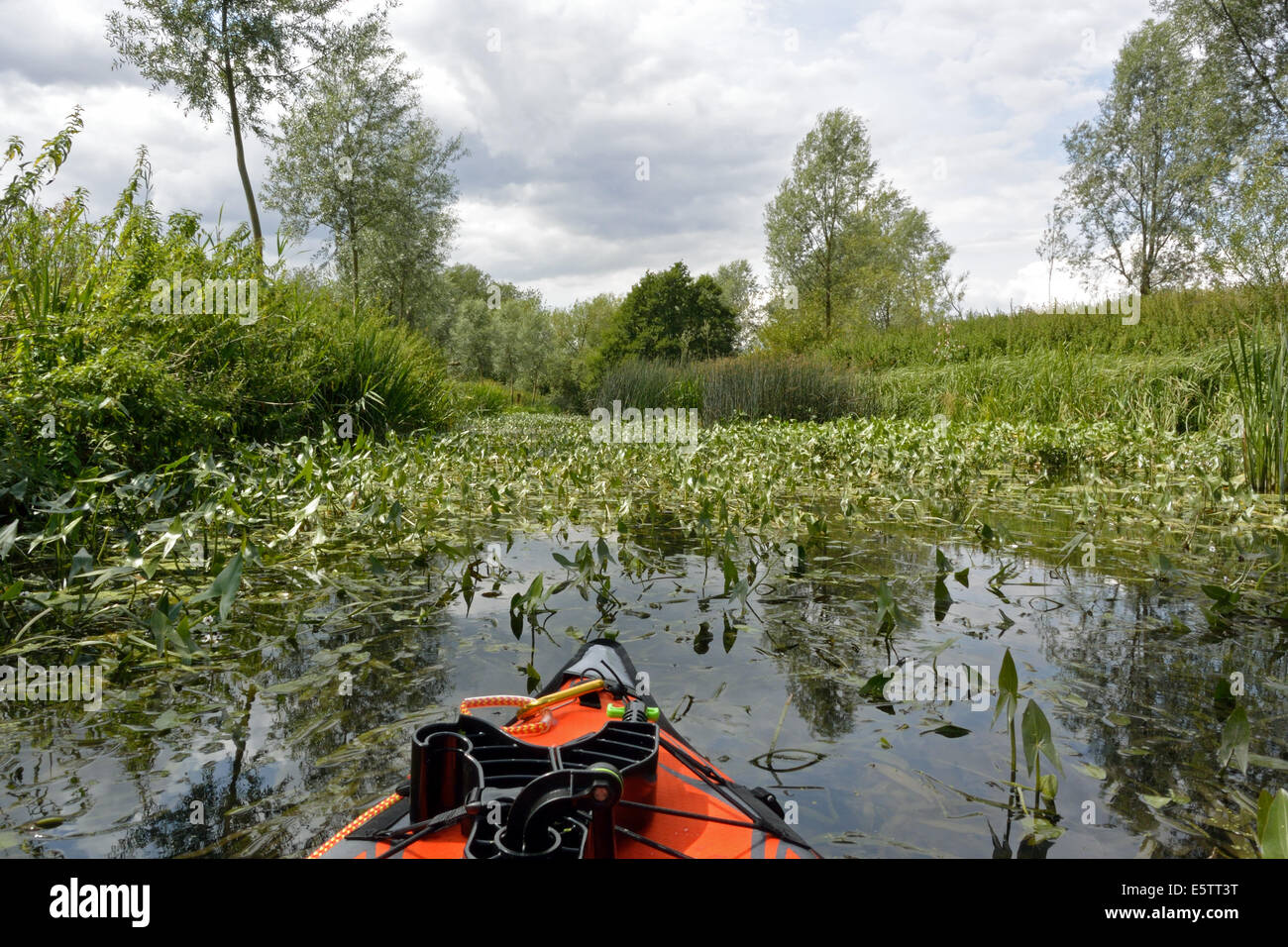 An abundance of plants in the water whilst kayak paddling on the River Stour Suffolk / Essex between Nayland and Stock Photo