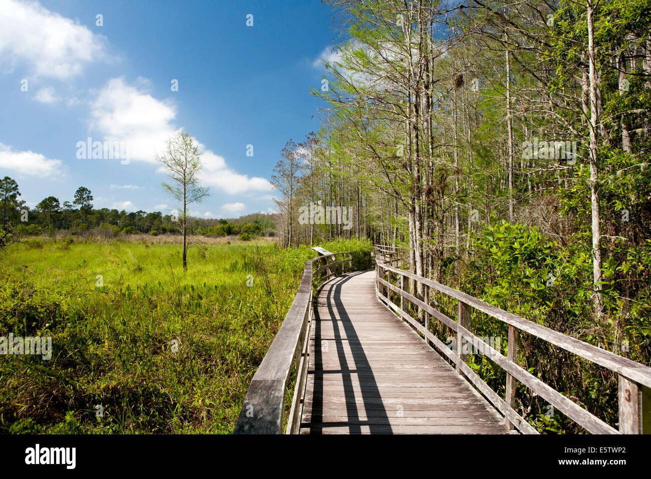 Boardwalk Trail at Corkscrew Swamp Sanctuary - near Namples, Florida USA - Stock Image