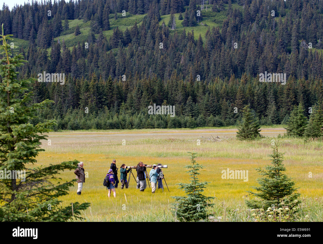 Bear Photographers and Watchers in Meadow Lake Clark National Park Alaska - Stock Image