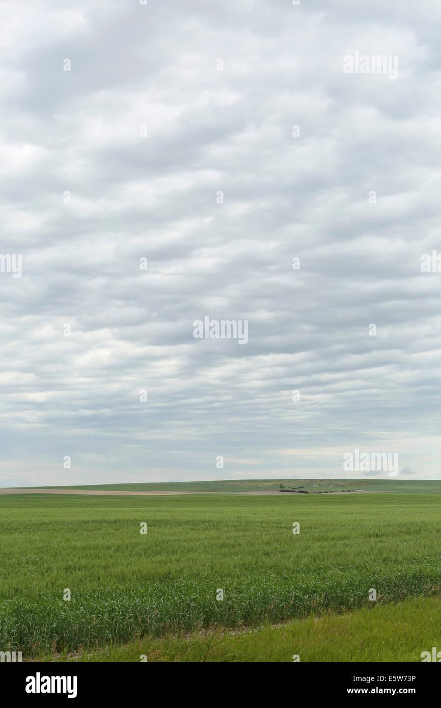 Prairie fields near Kyle, Saskatchewan, Canada. - Stock Image