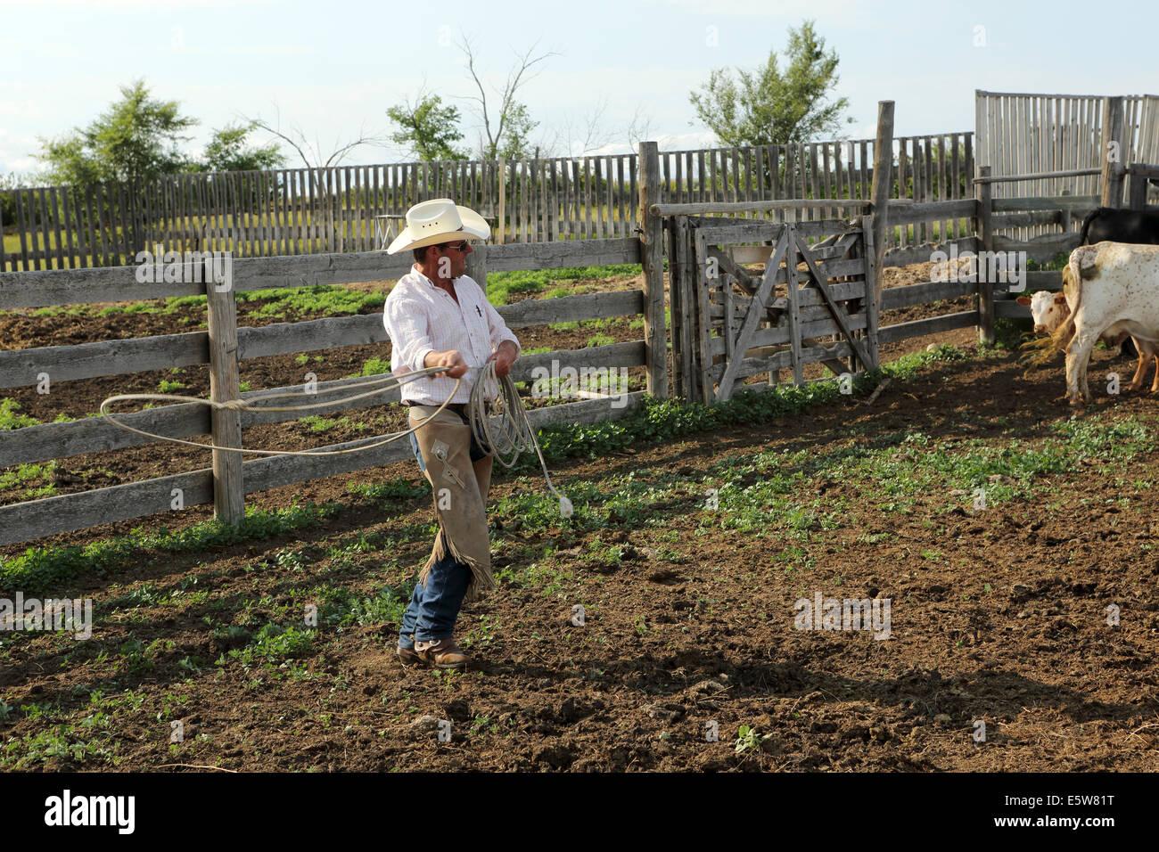 A man uses a lasso at La Reata Ranch near Kyle, Saskatchewan, Canada. - Stock Image